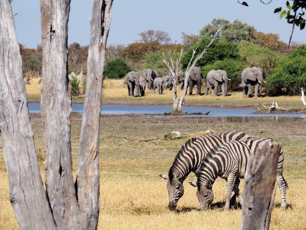 botswana-vakantiebestemmingen-2019