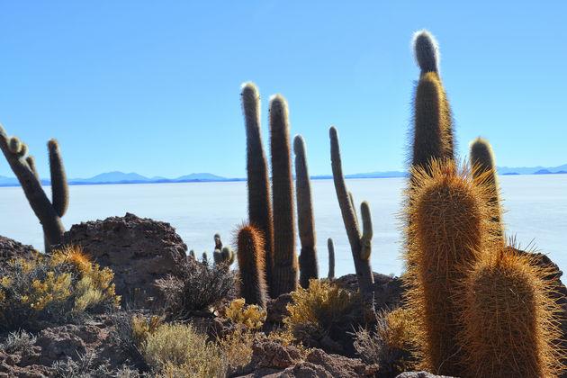 Cactuseiland-salar-de-uyuni