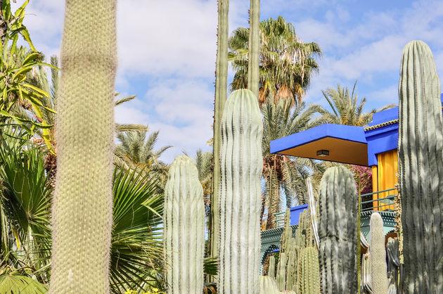cactussen-majorelle