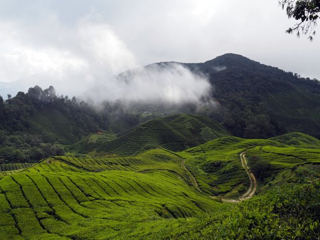 Cameron-Highlands-maleisie-3