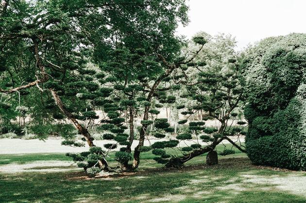 chateau-pesselieres-buxus-bomen