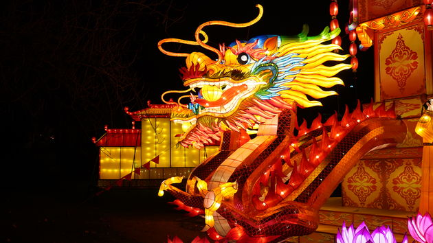 China_Light_Zoo_Antwerpen_Draak