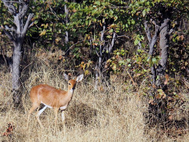 Chobe National Park (2)