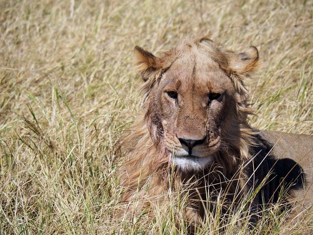 Chobe National Park (3)