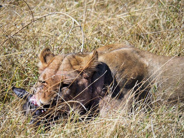 Chobe National Park (4)
