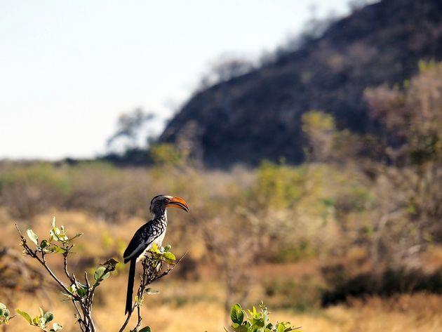 Chobe National Park (5)