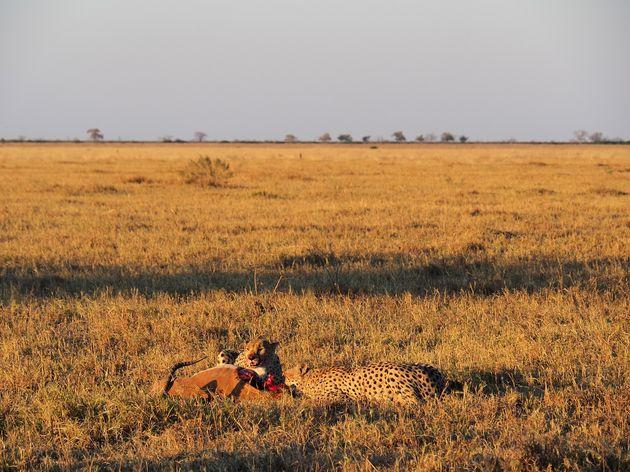 Chobe National Park (6)