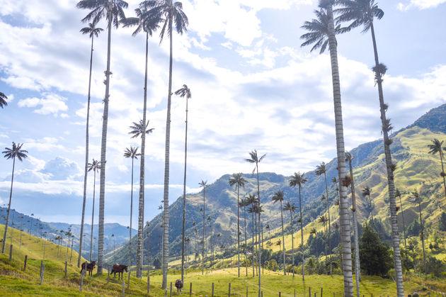 cocora-colombia