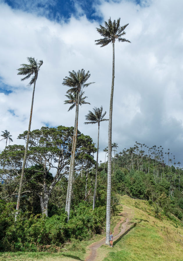 colombia-valle-cocora