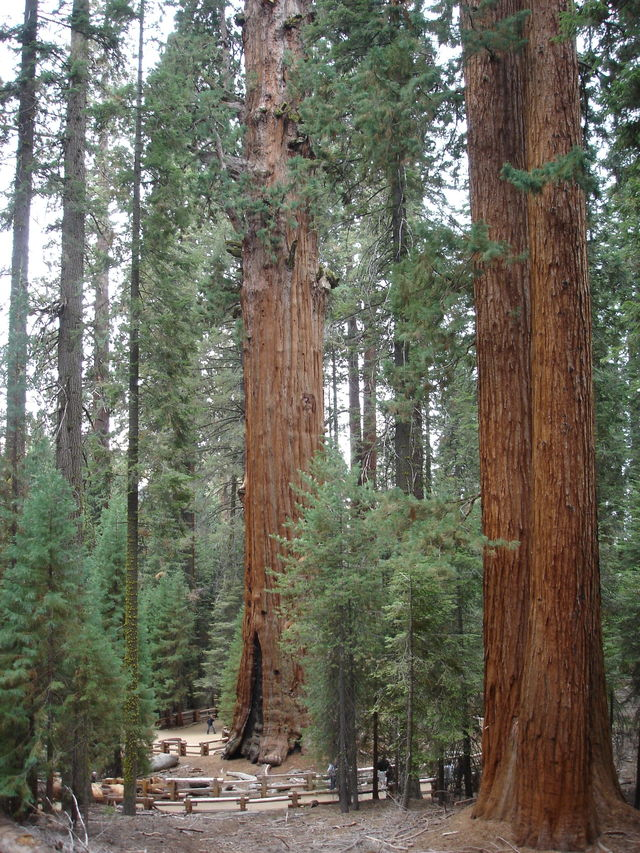 roadtrip_californie_sequoia