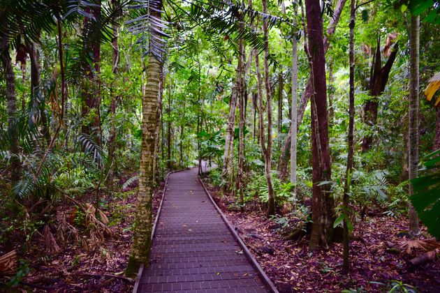 daintree-board-walk