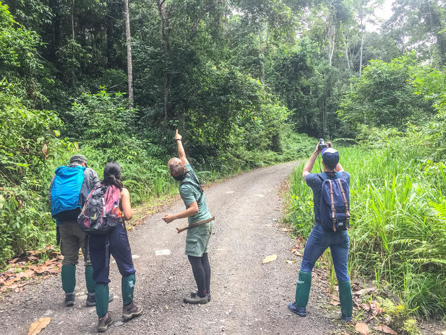 danum-valley-hike-jungle