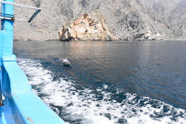 dolfijnen-musandam
