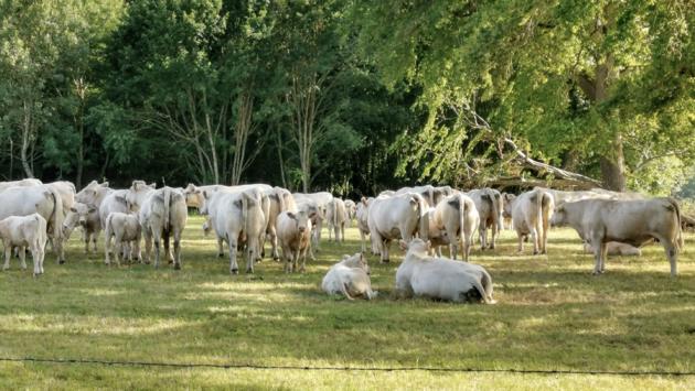 Domaine du Grand Bois Koeien