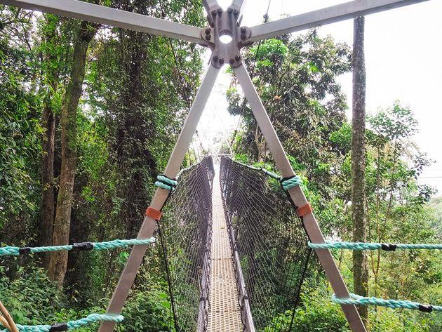 Eerste deel loopburg Nyungwe National Park Rwanda