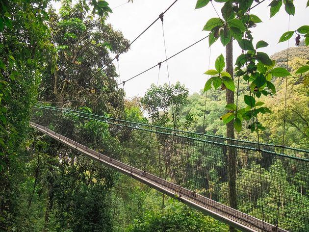 Eerste deel loopburg Nyungwe Rwanda