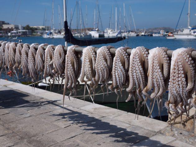 eilandhoppen-griekenland-inktvis