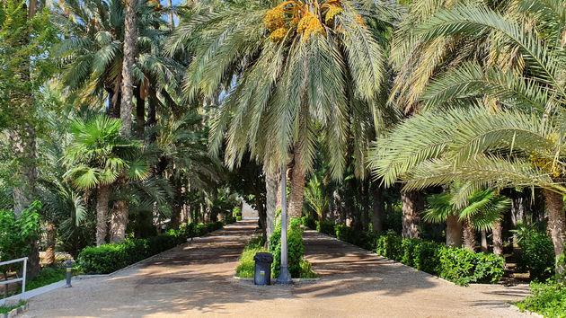 Elche-park-palmen