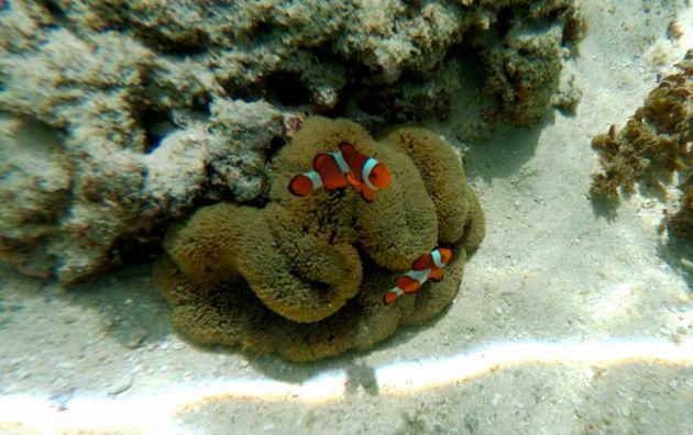 filipijnen-snorkelen