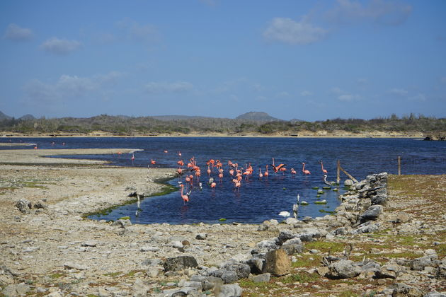 Flamingo_Washington_Slagbaai_National_Park