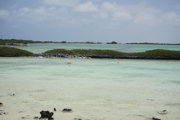 Flamingo's-Bonaire