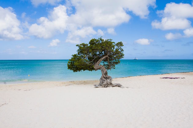 fofoti-eagle-beach