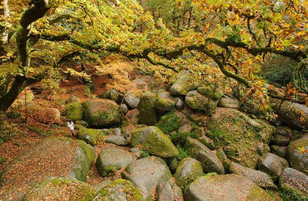 Forêt-de-Huelgoat