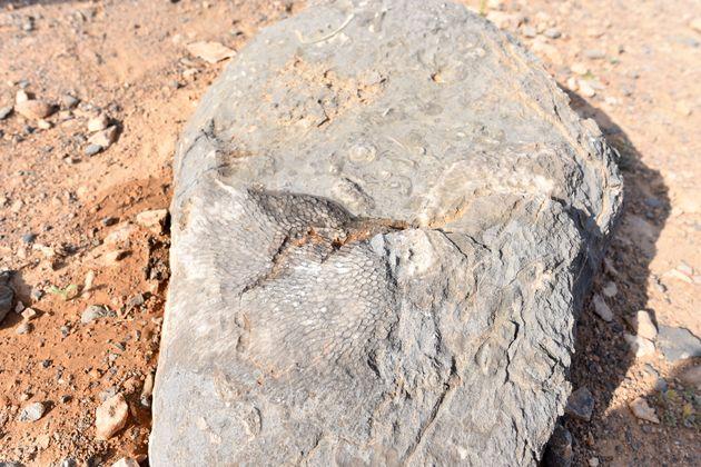 fossielen-Sayh-plateau