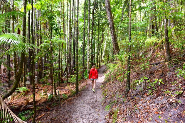 Fraser-Island Regenwoud