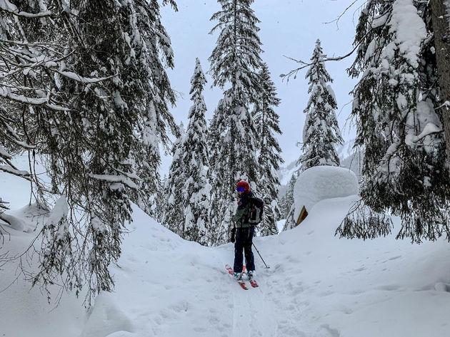 freeride-bomen