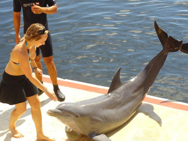 fun_cuba_dolfijnen