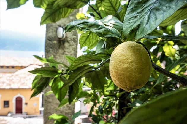 Gargnano-Limonaia-limoen