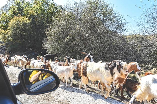 geiten-weg-griekenland
