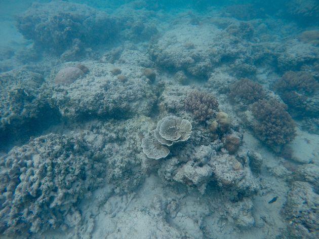 gili-air-snorkelen