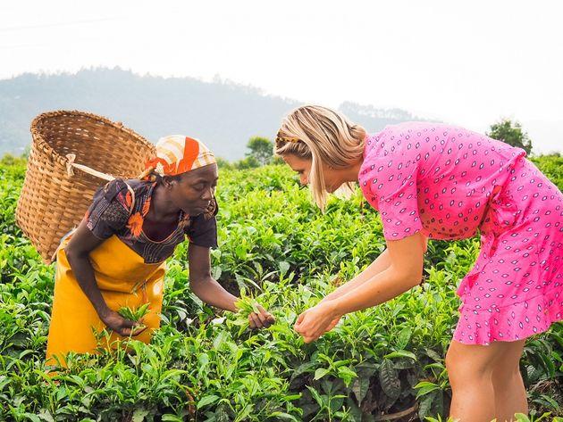 Gisakura theeplantage Rwanda