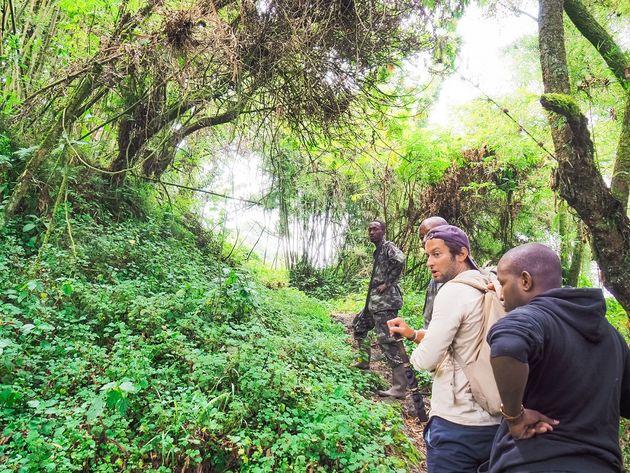 gorilla tracking door het regenwoud
