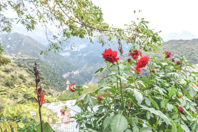 griekenland-bloemen-bergen