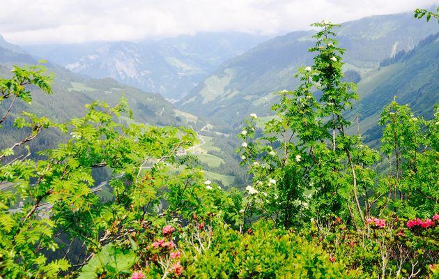 Großes-Walsertal-uitzicht-zomer
