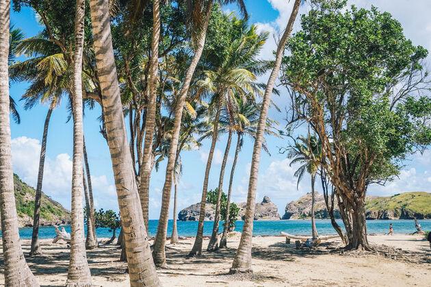 guadeloupe-foto-bomen-strand