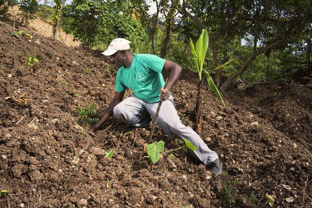 haiti-treedom-lokale-boer