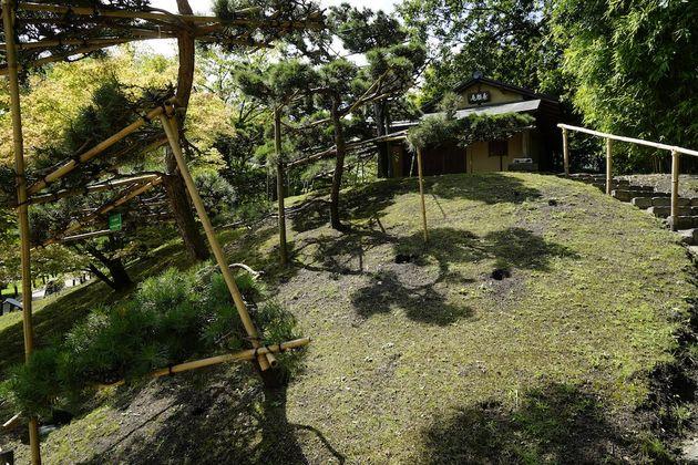Hasselt_Japanse_tuin_bomen