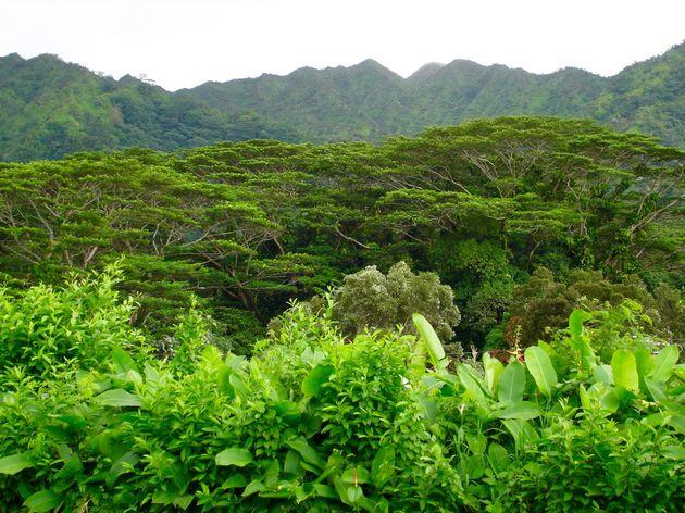 hawaii-inspiratie - 13