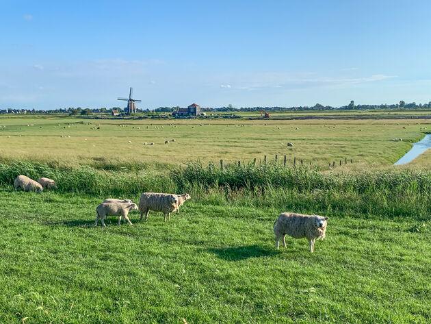 hollands-uitzicht