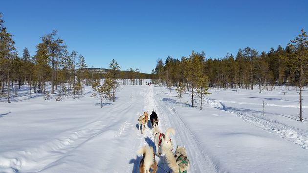 hondesledetocht-lapland-zweden