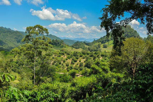 honduras-Ruines-van-Copan-uitzicht