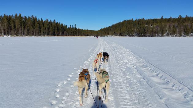 husky-tocht