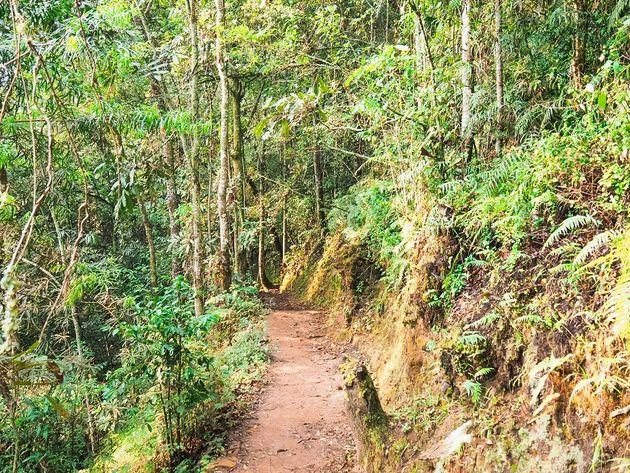 Igishigishigi trail Nyungwe National Park