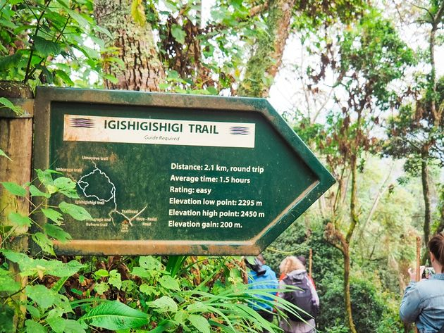 Igishigishigi trail Nyungwe Rwanda
