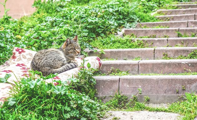 istanbul-balat-katten