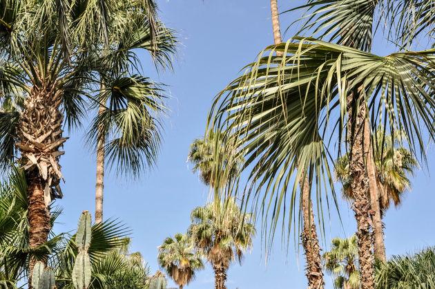 jardin-majorelle-palmbomen